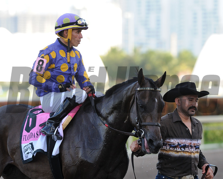 Garter and Tie wins the 2018 FTBOA Florida Sire Affirmed Stakes<br /> Coglianese Photos/Derbe Glass