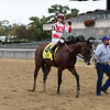 Complexity wins the 2018 Champagne Stakes at Belmont Park<br /> Coglianese Photos/Joe Labozzetta