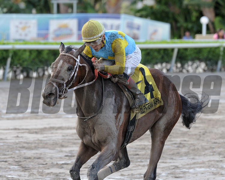 Lipstick City wins the Wasted Tears Stakes at Gulfstream Park Sunday, September 2, 2018. Photo: Coglianese Photos/Kenny Martin