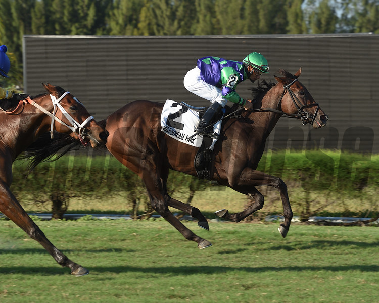 Vow to Recover wins the 2018 Juvenile Fillies Turf Stakes<br /> Coglianese Photos/Leslie Martin