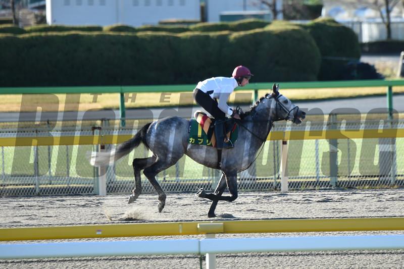 Capri in early morning training on beautiful morning of Friday, November 23rd, 2018 at Tokyo Race Course<br /> Katsumi Saito Photo