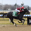 Forgotten Hero wins the 2018 New York Stallion Series Fifth Avenue Division at Aqueduct<br /> Coglianese Photos/Chelsea Durand