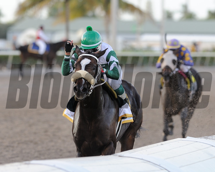 Well Defined wins 2018 FTBOA Florida Sire In Reality Stakes at Gulfstream Park. Photo: Coglianese Photos/Kenny Martin