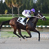 Mercusio - Maiden Win, Gulfstream Park West<br /> Coglianese Photos/Leslie Martin