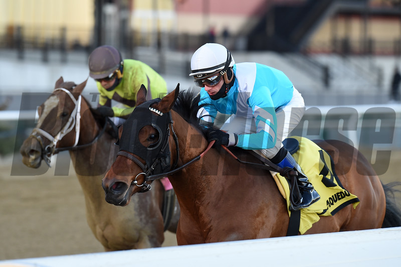 Blamed wins the 2018 Comely Stakes at Aqueduct<br /> Coglianese Photos/Chelsea Durand