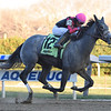 Matty's Magnum wins the 2018 Winter Memories Stakes at Aqueduct<br /> Coglianese Photos