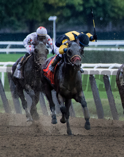 Discreet Lover with jockey Manny Franco heads to the finish line to win the 100th running of The Jockey Club Gold Cup at Belmont Park Saturday Sept. 29, 2018 in Elmont, N.Y.  Photo by Skip Dickstein