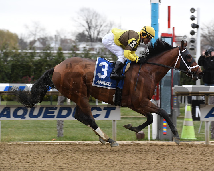 Plainsman wins the 2018 Discovery Stakes (G3) at Aqueduct<br /> Coglianese Photos/Susie Raisher