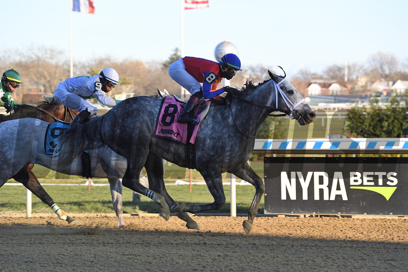 Life in Shambles wins the 2018 Fall Highweight<br /> Coglianese Photos/Susie Raisher