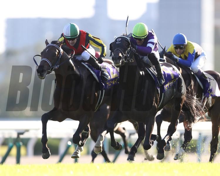 Firerement, Kikka Sho, G1, Kyoto Racecrouse, October 21, 2018