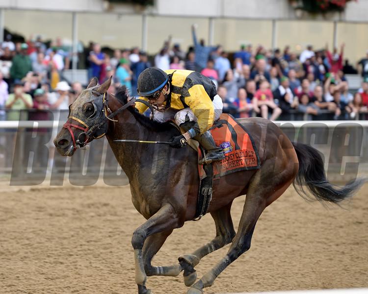 Discreet Lover wins 2018 Jockey Club Gold Cup Stakes at Belmont Park. Coglianese Photos/Joe Labozzetta