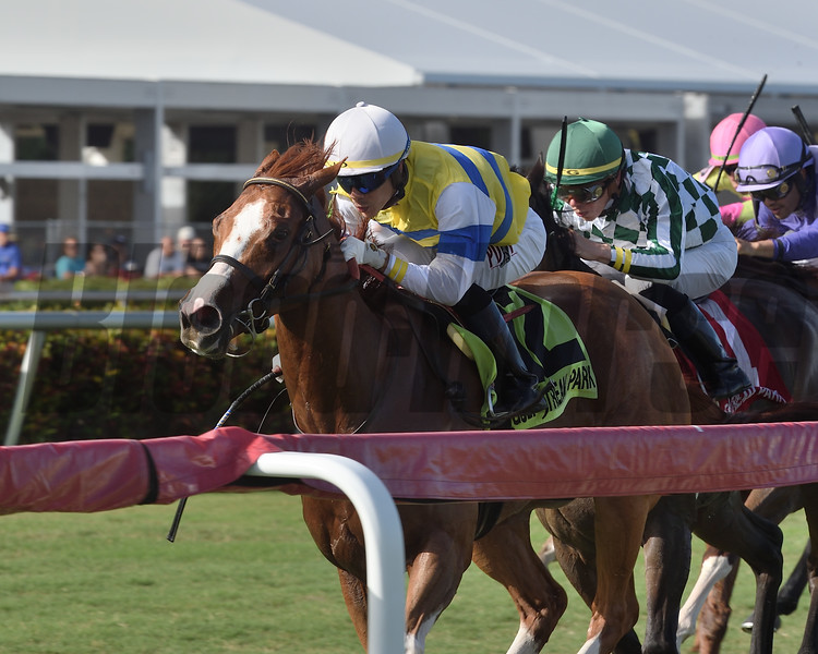 Girls Know Best wins the Abundantia Stakes at Gulfstream Park Saturday, December 29, 2018. Photo: Coglianese Photos/Kenny Martin