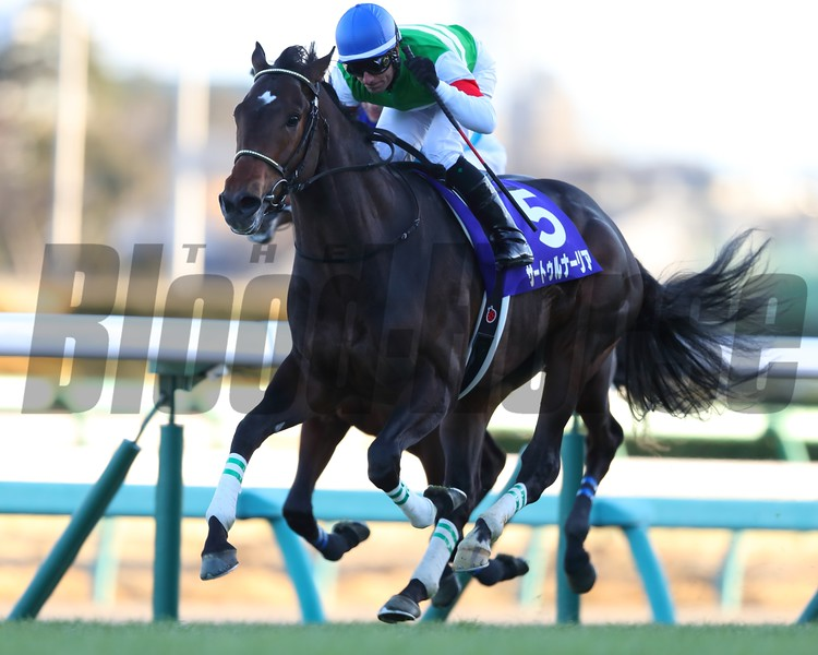 Saturnalia wins the 2018 Hopeful Stakes at Nakayama with Mirco Demuro aboard<br /> Masakazu Takahashi Photo