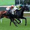 Forty Under wins the 2018 Pilgrim Stakes<br /> Coglianese Photos