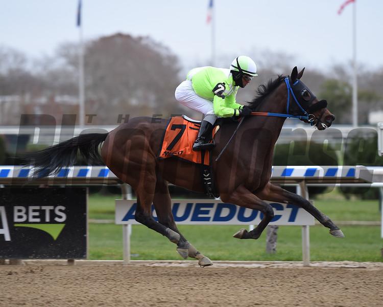 Gold for the King wins 2018 New York Stallion Series at Aqueduct. Photo: Coglianese Photos/Elsa Lorieul