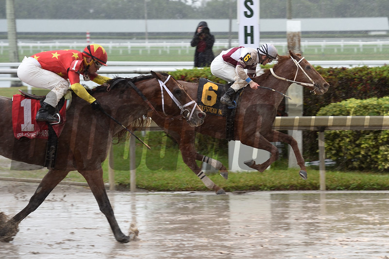 Sir Anthony wins the 2018 Harlan's Holiday at Gulfstream Park<br /> Coglianese Photos/Leslie Martin