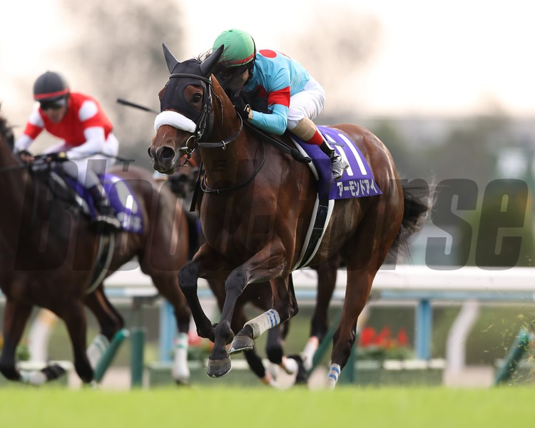Almond Eye, Christophe Lemaire, Shuka Sho, G1, 5th filly's Triple Crown, Kyoto Race Course, October 14, 2018