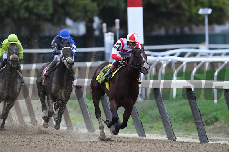 Complexity wins 2018 Champagne Stakes at Belmont Park. Photo: Coglianese Photos/Robert Mauhar