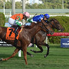 Too Charming wins the 2018 Tropical Park Oaks at Gulfstream Park<br /> Coglianese Photos/Leslie Martin