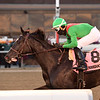 Bombshell wins the 2018 Forever Together Stakes at Aqueduct<br /> Coglianese Photos/Joe Labozzetta