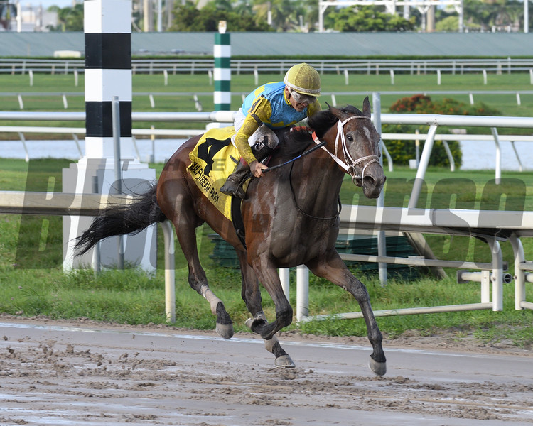 Lipstick City wins the Wasted Tears Stakes at Gulfstream Park Sunday, September 2, 2018. Photo: Coglianese Photos/Lauren King