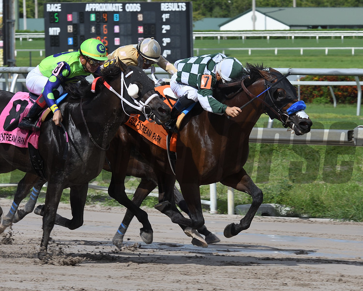 One of a Kind wins the 2018 The Vid Stakes<br /> Coglianese Photos/Lauren King