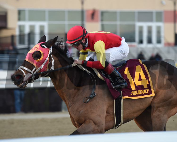 Yorkiepoo Princess wins 2018 Autumn Days Stakes at Aqueduct. Photo: Coglianese Photos/Elsa Lorieul