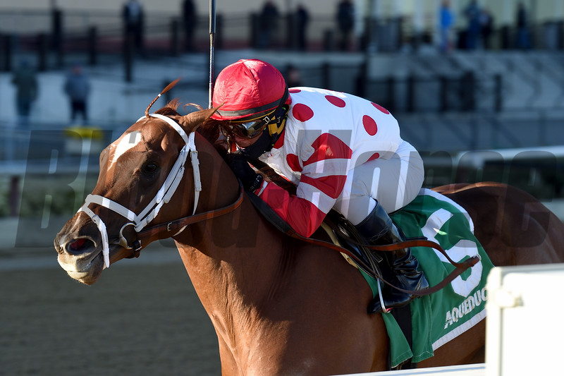 Bal Harbour wins the 2018 Gio Ponti Stakes at Aqueduct<br /> Coglianese Photos/Chelsea Durand