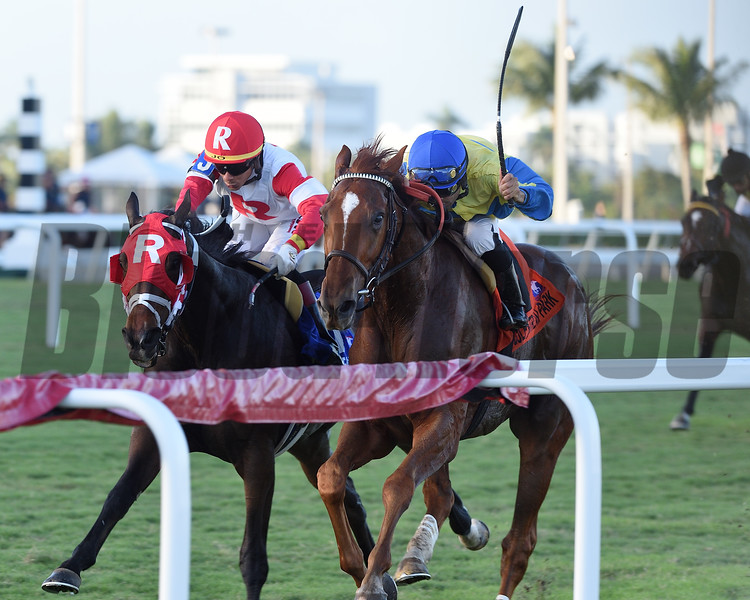 Red Knight wins the 2018 H. Allen Jerkens Stakes at Gulfstream Park<br /> Coglianese Photos/Kenny Martin