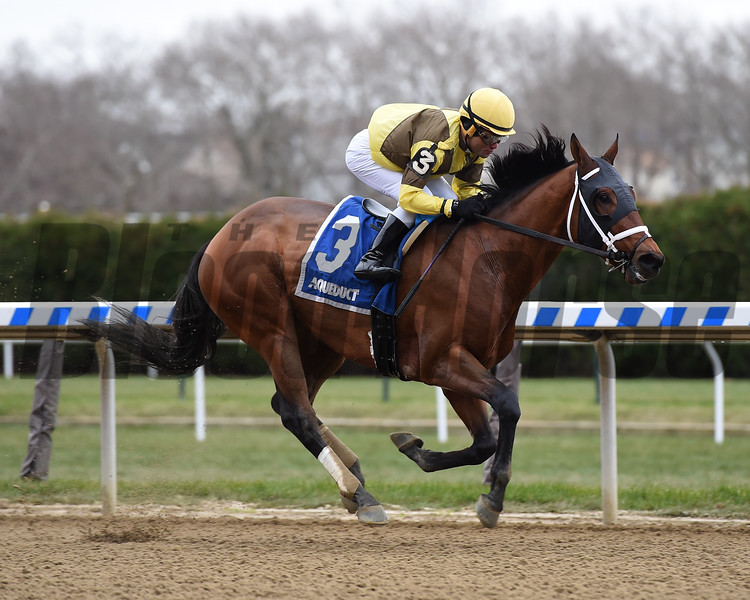 Plainsman wins the 2018 Discovery Stakes at Aqueduct<br /> Coglianese Photos/Elsa Lorieul