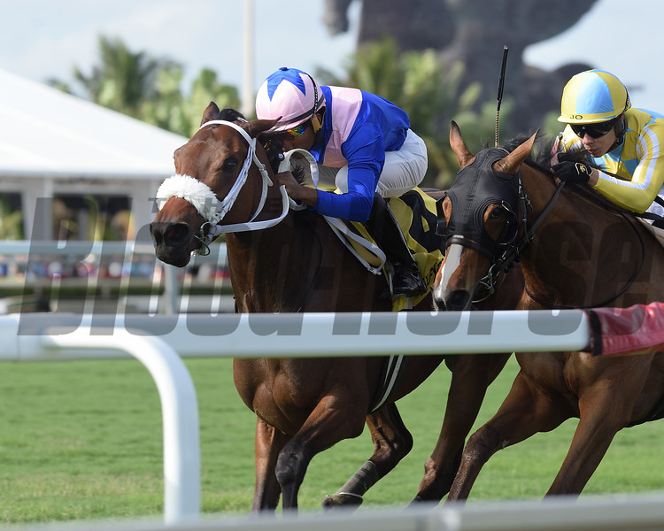 A Bit Special wins the 2018 Wait a While Stakes at Gulfstream Park<br /> Coglianese Photos/Kenny Martin