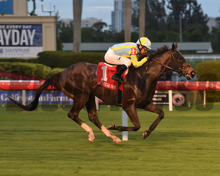 Glorious Empire wins the 2018 Ft. Lauderdale Stakes at Gulfstream Park<br /> Coglianese Photos/Leslie Martin