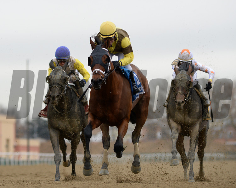 Plainsman wins the 2018 Discovery Stakes (G3) at Aqueduct<br /> Coglianese Photos