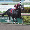 Coal Front wins the Mr. Prospector Stakes at Gulfstream Park Saturday, December 22, 2018. Photo: Coglianese Photos/Lauren King