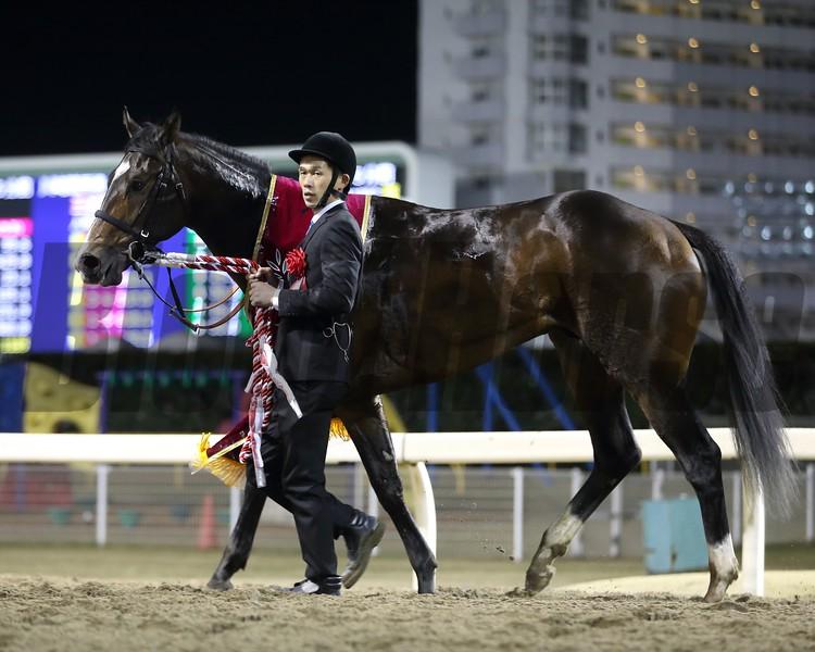 Nova Lenda wins the 2018 Zen Nippon Nisai Yushun at Kawasaki Racecourse<br /> Photo: Masakazu Takahashi