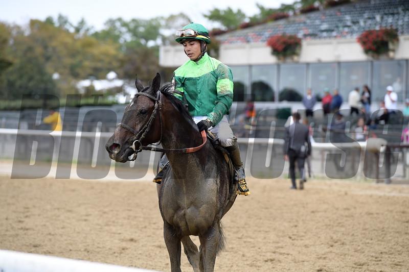 Wow Cat wins the 2018 Beldame Stakes<br /> Coglianese Photos/Joe Labozzetta