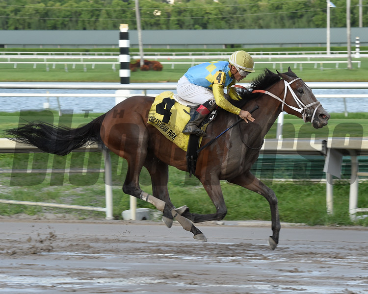Lipstick City wins the Wasted Tears Stakes at Gulfstream Park Sunday, September 2, 2018. Photo: Coglianese Photos/Leslie Martin