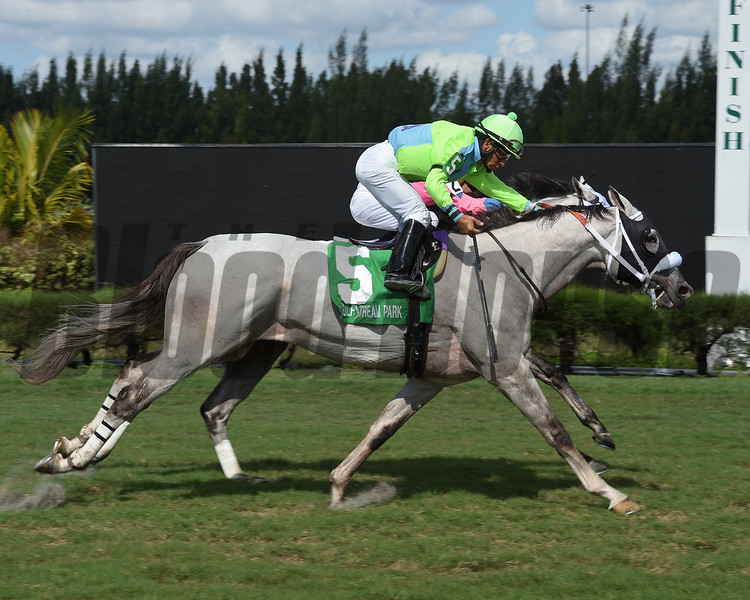 Galleon Mast wins the 2018 Millions Turf Preview<br /> Coglianese Photos/Leslie Martin
