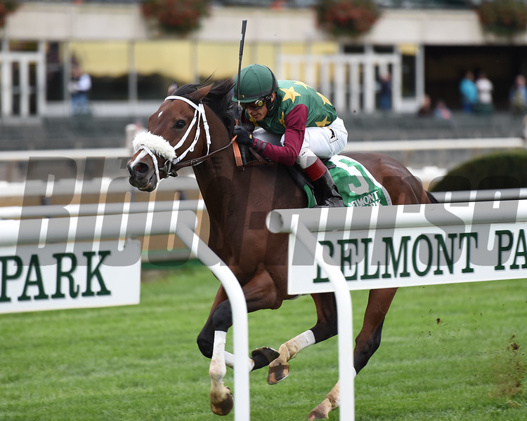 Hello Don Julio wins 2018 Point of Entry Stakes at Belmont Park. Photo: Elsa Lorieul