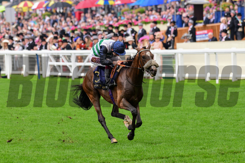 Dashing Willoughby and Oisin Murphy win the G2 Queen's Vase, 6-19-20, Royal Ascot, Ascot, UK, photo by Mathea Kelley/Bloodhorse