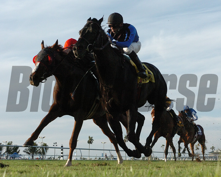 Einstein wins the 2008 Gulfstream Park Turf Stakes (G1T)<br /> Coglianese Photos
