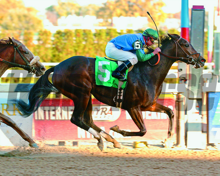 Tamberino wins at Aqueduct.<br /> Coglianese Photos