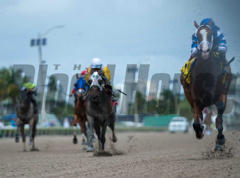Prince Lucky with  John Velazquez   wins The Gulfstream Park mile  .  @ Gulfstream Park.  March 30 2019<br /> ©JoeiOrio/Winningimages.biz