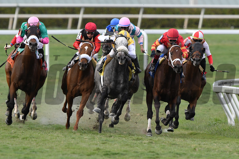 Focus Group wins 2019 Pan American Stakes at Gulfstream Park. Photo: Coglianese Photos/Tim Sullivan