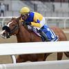 Stonesintheroad wins the 2019 Franklin Square Stakes at Aqueduct<br /> Coglianese Photos/Joe Labozzetta