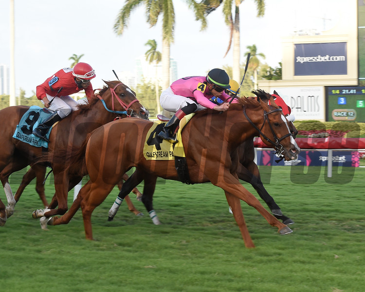 Yes I Am Free wins the 2019 Texas Glitter Stakes at Gulfstream Park<br /> Coglianese Photos/Leslie Martin