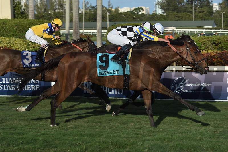 Santa Monica wins the 2019 Orchid Stakes at Gulfstream Park<br /> Coglianese Photos/Leslie Martin