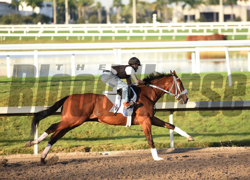 Maximus Mischief  works for Holly Bull   @ Gulfstream Park Jan 19 2019<br />       ©JoeDiOrio/Winningimages.biz