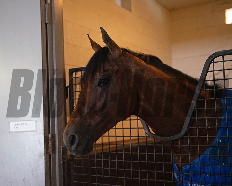 Old Persian<br /> at Woodbine.