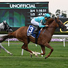 Uni wins the 2019 Perfect Sting Stakes at Belmont Park<br /> Coglianese Photos/Susie Raisher